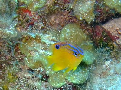 カリブ海の魚たち♪              COZUMEL/MEXICO_e0184067_1735159.jpg
