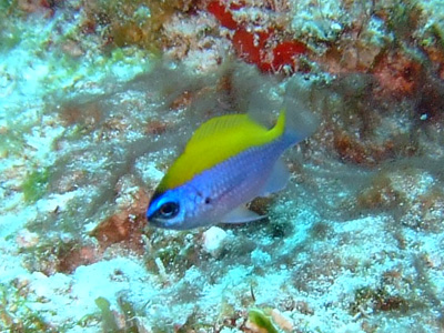 カリブ海の魚たち♪              COZUMEL/MEXICO_e0184067_1741743.jpg