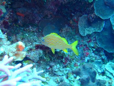 カリブ海の魚たち♪              COZUMEL/MEXICO_e0184067_1743627.jpg