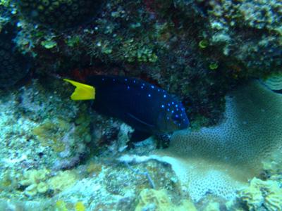 カリブ海の魚たち♪              COZUMEL/MEXICO_e0184067_174650.jpg