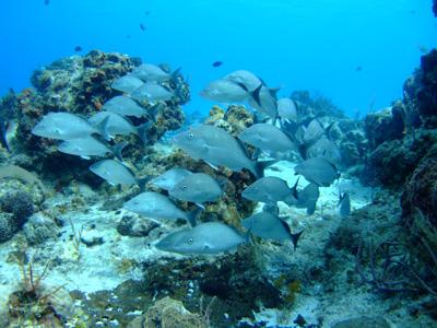 カリブ海の魚たち♪              COZUMEL/MEXICO_e0184067_1752032.jpg