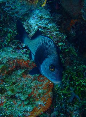 カリブ海の魚たち♪              COZUMEL/MEXICO_e0184067_1753246.jpg
