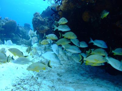 カリブ海の魚たち♪              COZUMEL/MEXICO_e0184067_175386.jpg