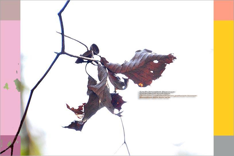 f0198771_010196.jpg