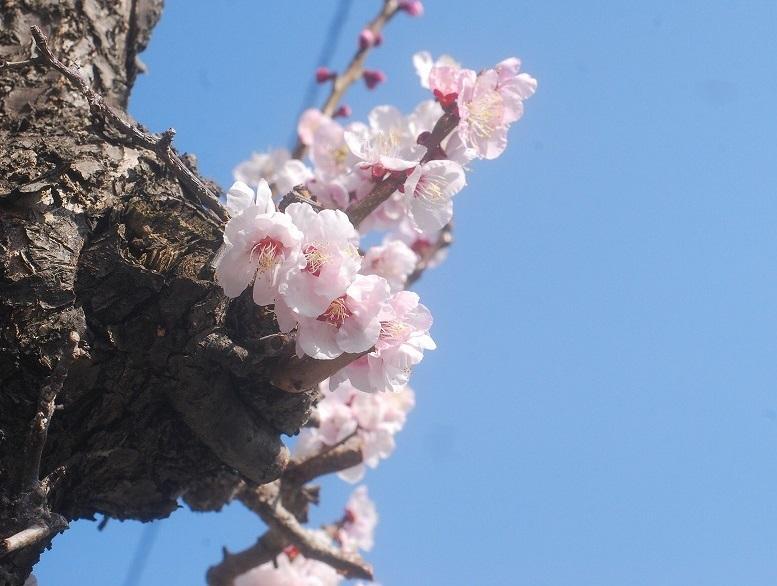 暑い春_c0187781_1253986.jpg
