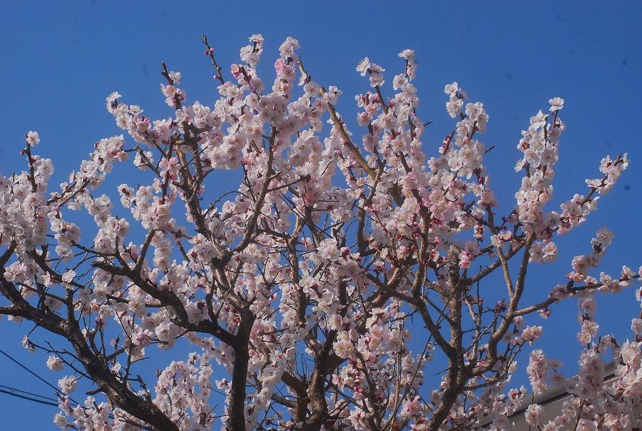 暑い春_c0187781_132213.jpg