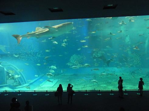 3日目:ちゅら海水族館→関空_a0207588_221240100.jpg