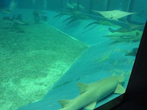 3日目:ちゅら海水族館→関空_a0207588_22133030.jpg