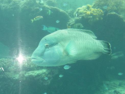 3日目:ちゅら海水族館→関空_a0207588_2262572.jpg
