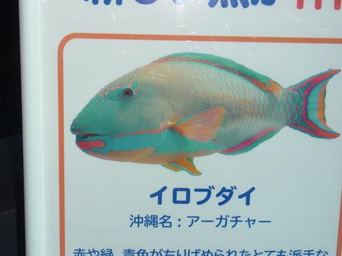 3日目:ちゅら海水族館→関空_a0207588_2291544.jpg