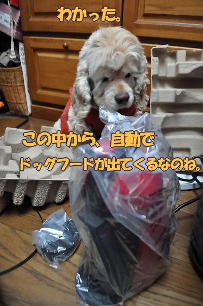 b0067012_10424465.jpg