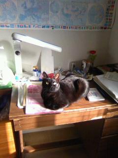 黒猫「静」の最近_b0255217_1111539.jpg