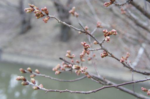 一転、琵琶湖の春は_f0155431_20391994.jpg