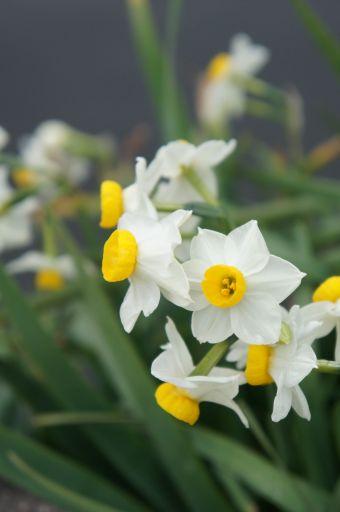 一転、琵琶湖の春は_f0155431_20482938.jpg