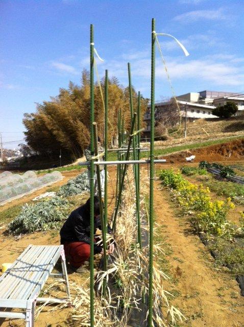 エンドウ豆のネット張りは A氏&Nさん&Sさん&飯田の4名_c0222448_12432095.jpg
