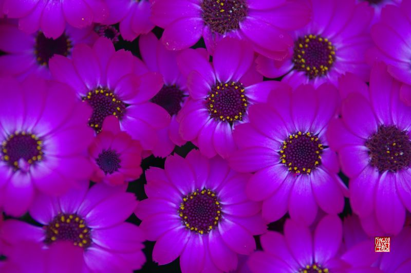 花 っていいなぁ_a0157263_2321820.jpg