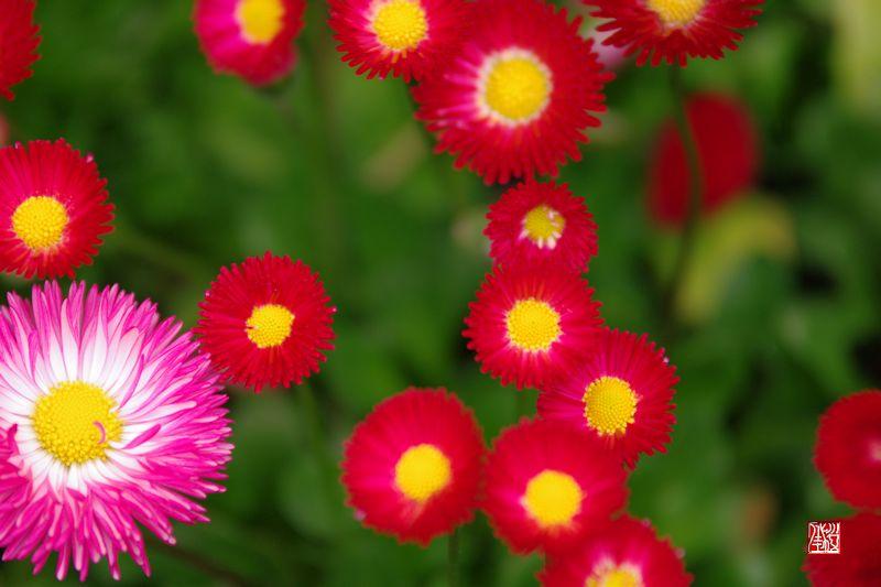 花 っていいなぁ_a0157263_2322968.jpg