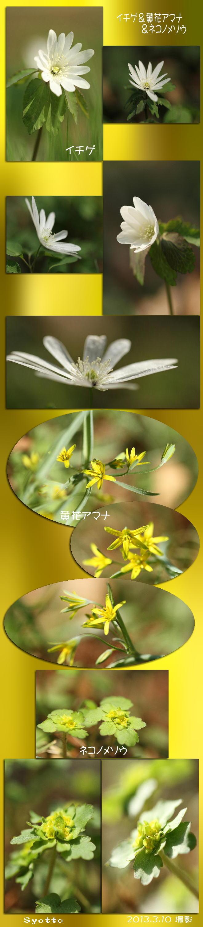 f0164592_21105217.jpg