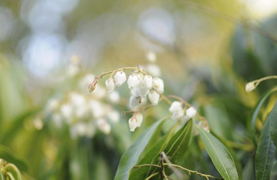 春の訪れ_e0241305_17141058.jpg