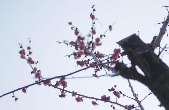 春の訪れ_e0241305_1714612.jpg