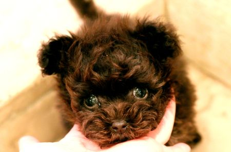 puppy\'s for sale!_d0060413_21351099.jpg