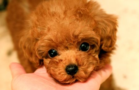 puppy\'s for sale!_d0060413_21373835.jpg