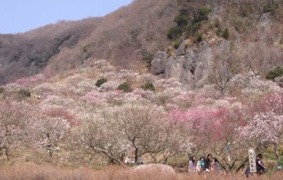 梅も満開、花粉も全開!_e0234016_16261728.jpg