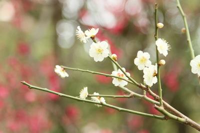 春来る・・・かな_a0165018_22243249.jpg