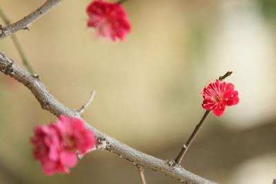 春来る・・・かな_a0165018_2227869.jpg