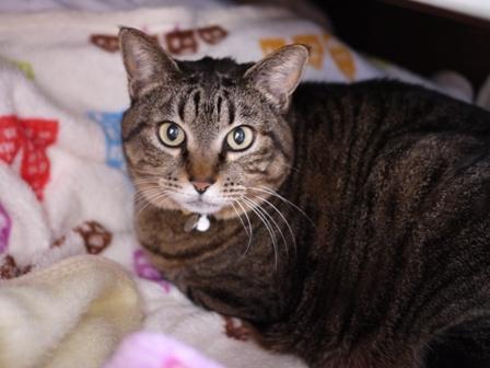 猫のお友だち 珊瑚ちゃん祿太くん編。_a0143140_2323535.jpg