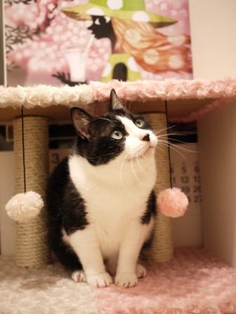 【ゆきねこ雑貨店】まるまるふわふわキャットタワー猫 空しぇる編。_a0143140_233702.jpg