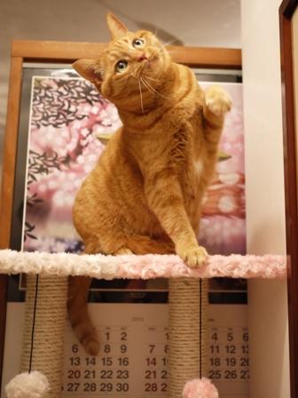 【ゆきねこ雑貨店】まるまるふわふわキャットタワー猫 空しぇる編。_a0143140_23453624.jpg