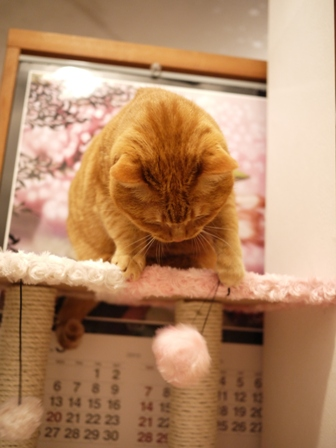 【ゆきねこ雑貨店】まるまるふわふわキャットタワー猫 空しぇる編。_a0143140_23465789.jpg