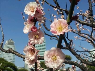 春です~_e0277143_1705113.jpg