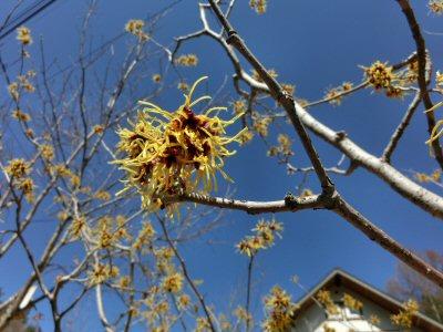 春の光・春の音_f0019247_2325347.jpg