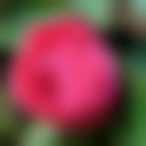 b0133752_1814363.jpg