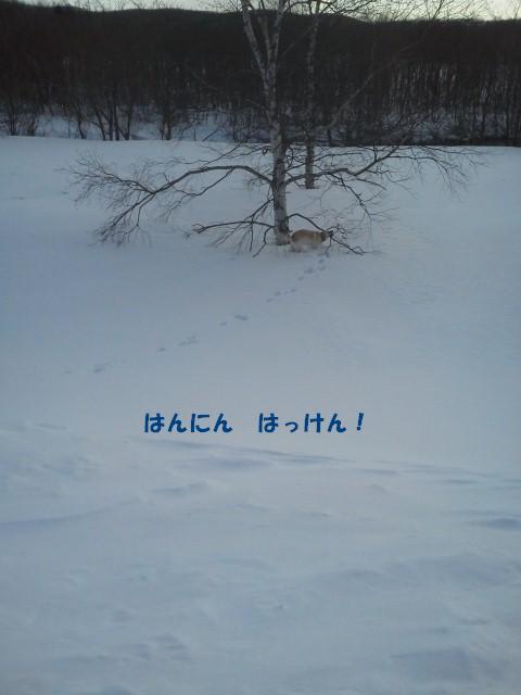 c0117058_20302124.jpg