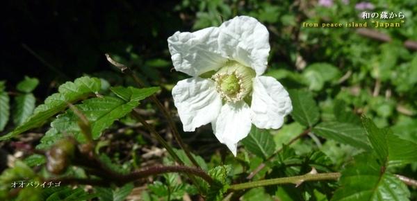 きれいな花にはトゲがある_f0258061_20492318.jpg