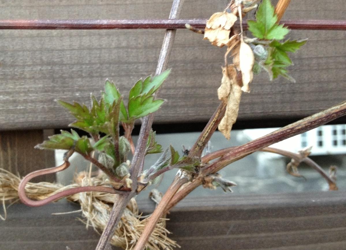 木っ端による東日本大震災義援金について_d0237564_48056.jpg