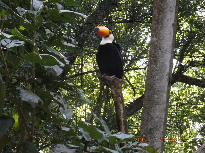 ブラジルの鳥 The Birds of Brazil_e0140365_19383013.jpg