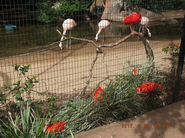 ブラジルの鳥 The Birds of Brazil_e0140365_1953180.jpg