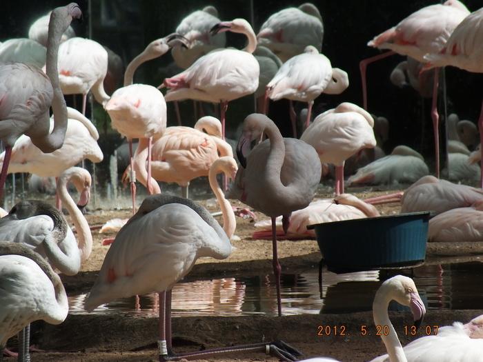 ブラジルの鳥 The Birds of Brazil_e0140365_19565465.jpg