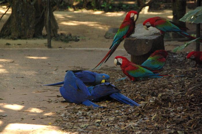ブラジルの鳥 The Birds of Brazil_e0140365_201050.jpg