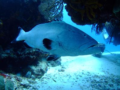 カリブ海の魚たち2♪          COZUMEL/MEXICO_e0184067_11504995.jpg