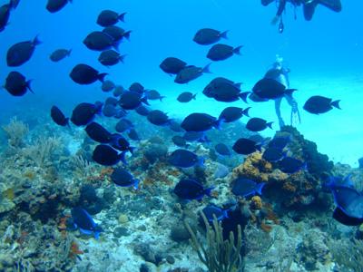 カリブ海の魚たち2♪          COZUMEL/MEXICO_e0184067_11512815.jpg