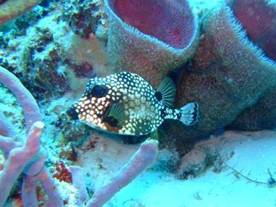 カリブ海の魚たち2♪          COZUMEL/MEXICO_e0184067_11514656.jpg