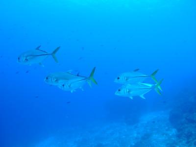 カリブ海の魚たち2♪          COZUMEL/MEXICO_e0184067_115154.jpg