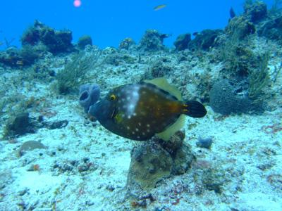 カリブ海の魚たち2♪          COZUMEL/MEXICO_e0184067_11515472.jpg