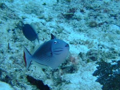 カリブ海の魚たち2♪          COZUMEL/MEXICO_e0184067_11521031.jpg