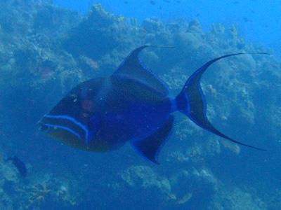 カリブ海の魚たち2♪          COZUMEL/MEXICO_e0184067_11521960.jpg